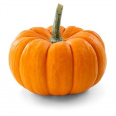 Pumpkin (made to order)